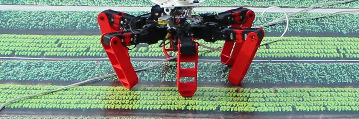 How ants help a robot to navigate without GPS