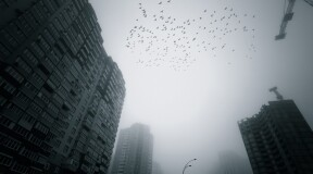How do high-rise buildings harm migratory birds?