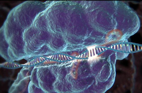 Correcting genetic mistakes with CRISPR/Cas