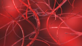 Scientists grow blood vessels from stem cells