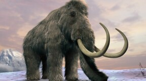 Scientists activate ancient mammoth cells