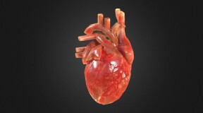 Scientists introduce 3D printed heart