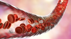 Scientists Discover New Type of Blood Vessels