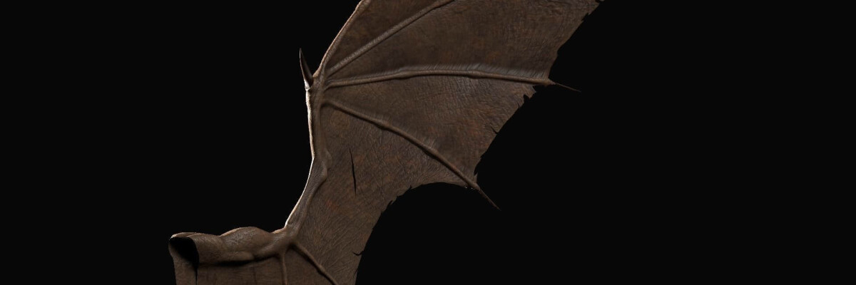 Scientists reveal dinosaur with bat wings