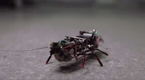 Cockroach robots get their team spirit