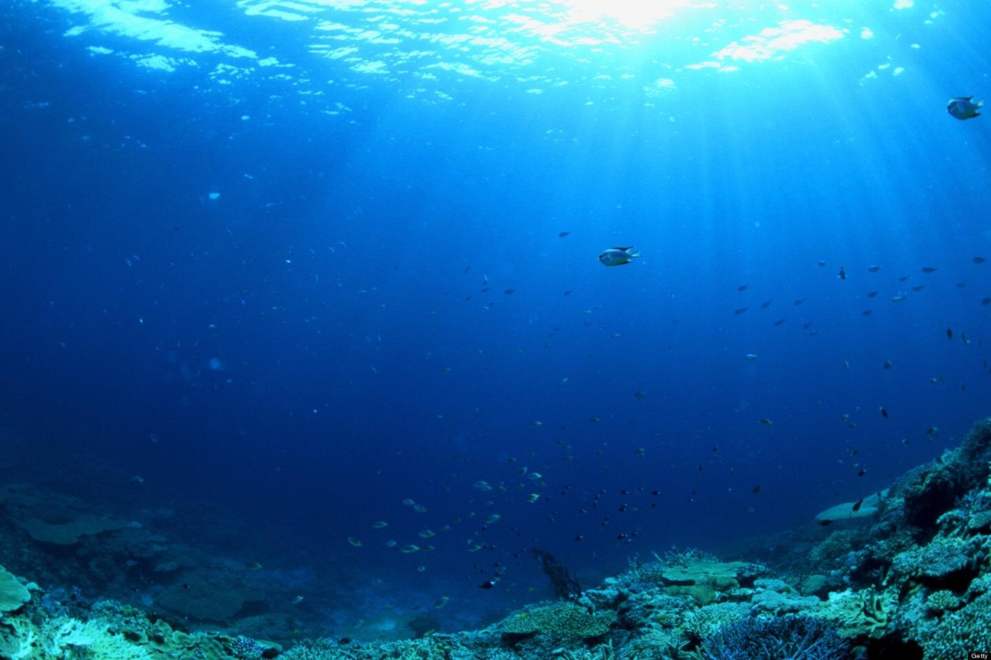 Море под водой картинки