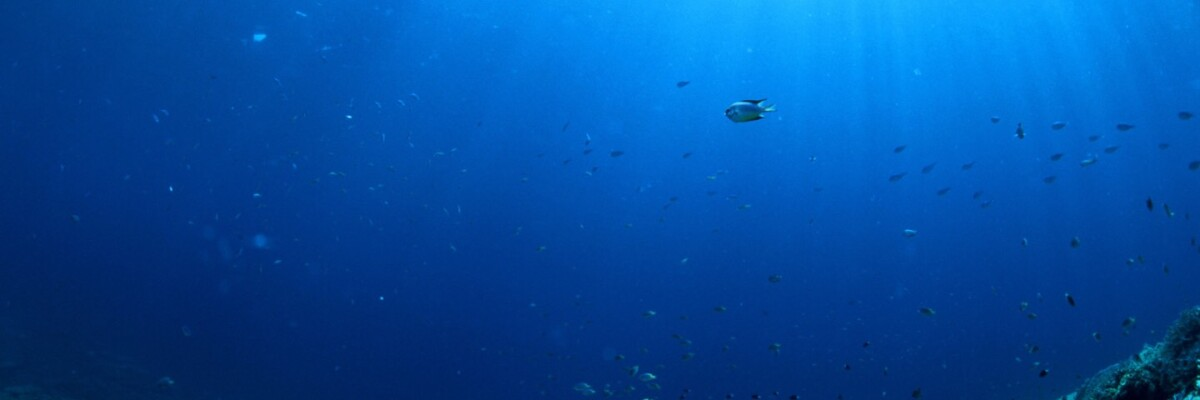 Arsenic breathing microbe discovered in the Pacific Ocean