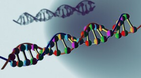 Gene of DNA – the most comprehensive model