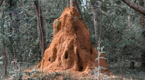 House modeled after termite mounds built in Africa
