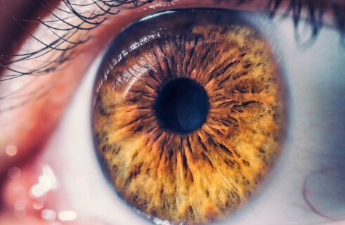 Orion implant will restore eyesight for vision impaired patients