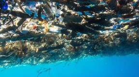 How can we clean up the World Ocean?