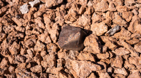 Ribose found in meteorites