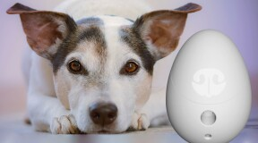 Go Dogo takes care of your pet when you are not around