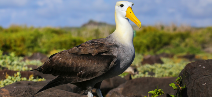 Albatrosses are being recruited to patrol the ocean