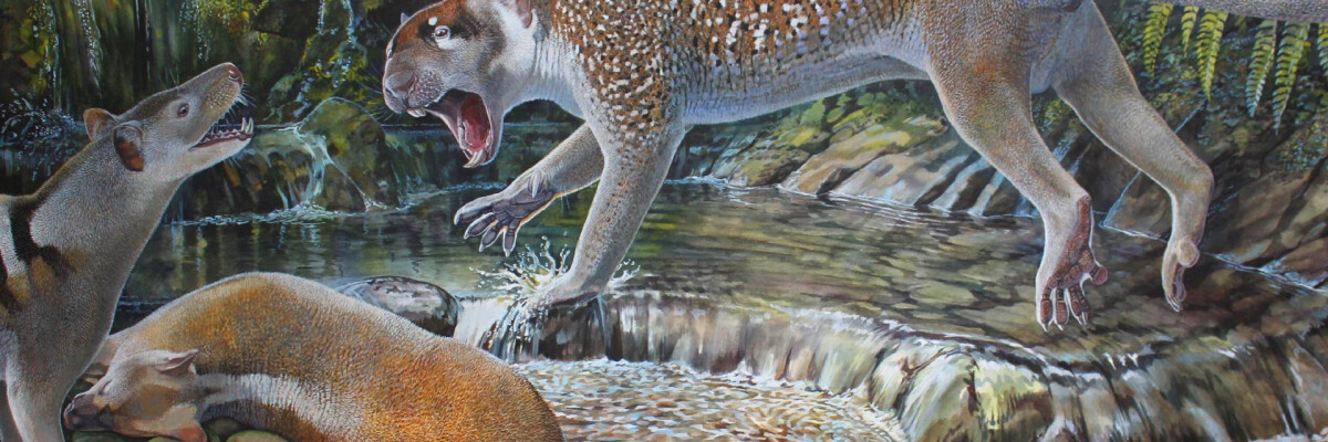 The remains of an ancient dwarf lion were discovered in Australia